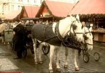FOTO: Koně s kočím jako z pohádky