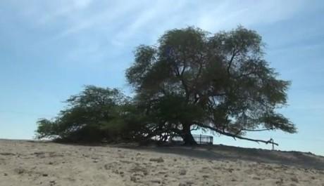 FOTO: Strom života se hrdě tyčí na vrcholku písečné duny