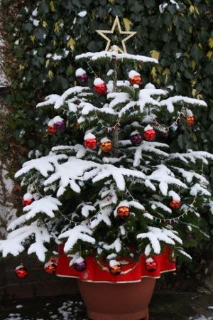 FOTO: Vánoční stromek