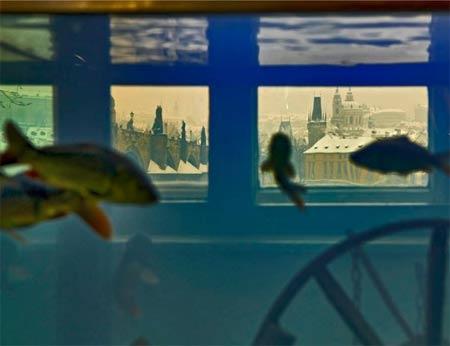 FOTO:vltavsky-rybi-betlem