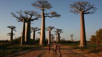 Foto: Procházka pod baobaby