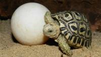 FOTO: Mládě želvy