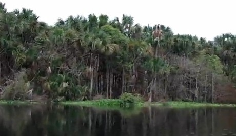 FOTO: Pralesy na břehu Orinoka