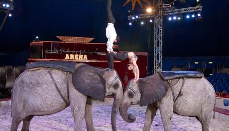 FOTO: Festival Cirkus Cirkus. René Casselly Drezura slonů a koní