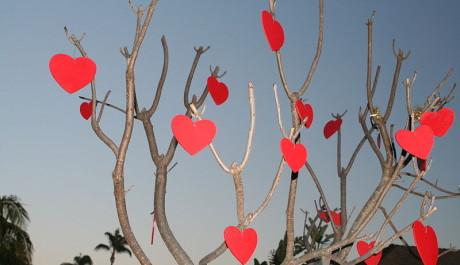 FOTO: Valentýnský strom