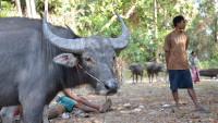 FOTO: Očkování v Kambodži