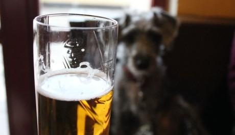 FOTO: Pes pije pivo
