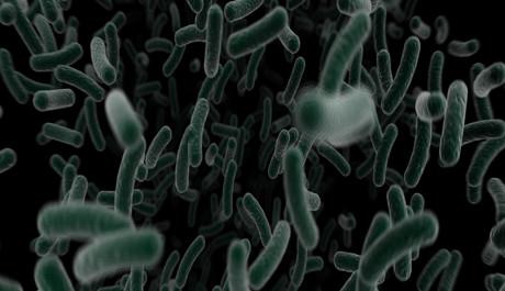OBR: Bakterie chlamydie