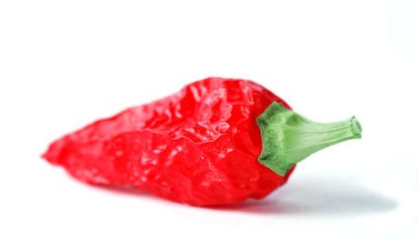 FOTO: Chilli paprička
