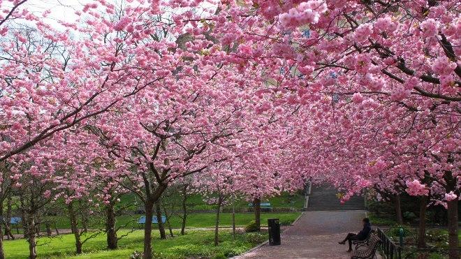 FOTO: rozkvetlý park