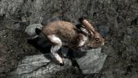 Skyrim bunny hostile