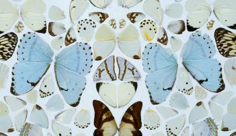 FOTO:Hirst se rád vrací k jednotlivým tématům. Motýli jsou jedním z nich