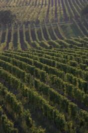 FOTO: Rozlučka se svobodou na vinici