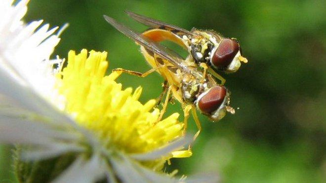 FOTO: Hmyz