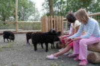 Děti se mohou podívat také do výběhu se zvířaty. Zdroj: mirakulum.cz