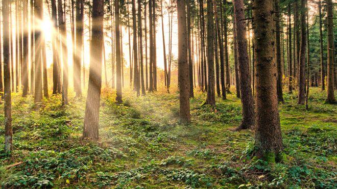 prodej lesa - na co si dát pozor