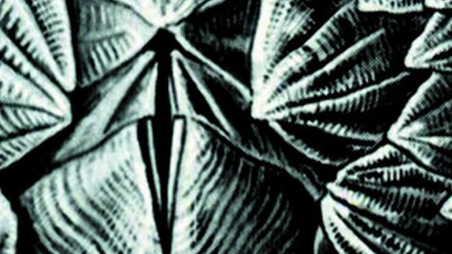 FOTO: výřez obálky knihy Náměsíčníci