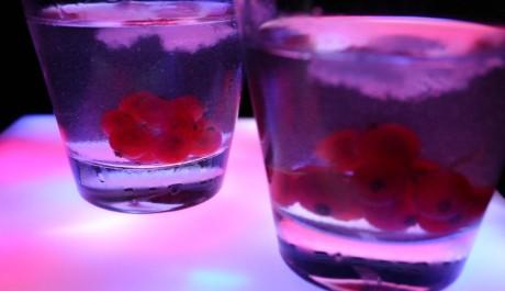 FOTO: Drink