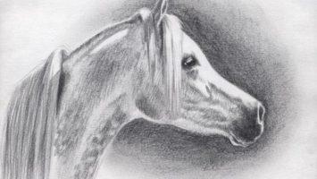 Jak nakreslit koně, arabský kůň