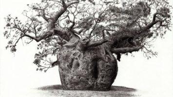 FOTO: kresleni_stromu