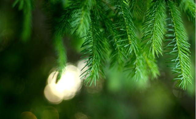 FOTO: Vánoční literatura