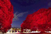 Projekt Earth V Sky, Allan Giddy, Zdroj: www.cityartsydney.com.au