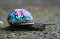 Barvení šnečích ulit, Foto: Slinkachu