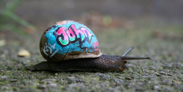painted-snail-shell-6-990x500