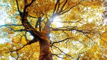 strom_pad