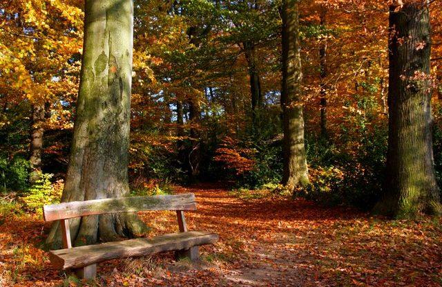 podzim_les_listi_priroda_listopad_rijen