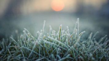 trava_s_namrazou_zima