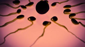 spermie-vajicko-umele-oplodneni