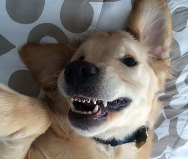 rovnatka-na-zuby-pro-psy-usmev