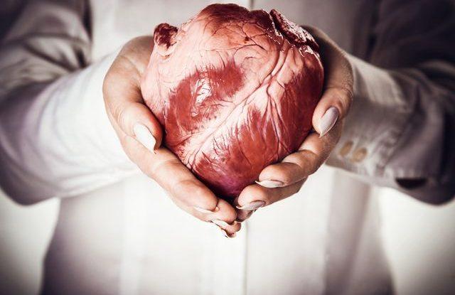 Transplantace orgánů, srdce
