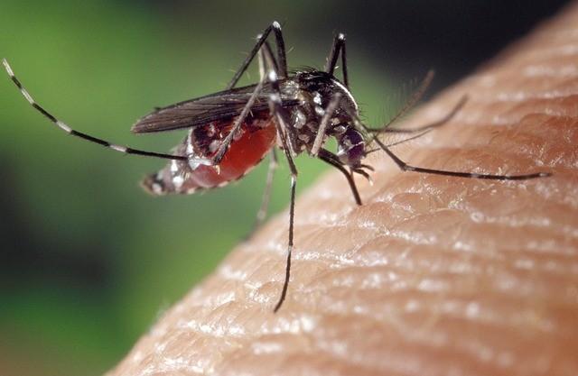 Repelent na komáry přenášející malárii