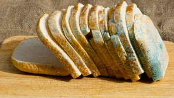 Může se jíst plesnivý chléb nebo sýr