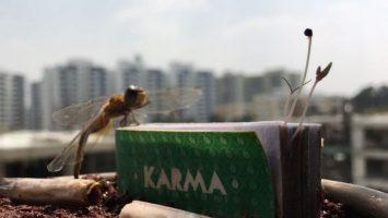 Mohou růst stromy z cigaretových filtrů