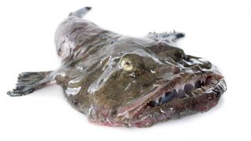 Muž masturboval s rybím žaludkem