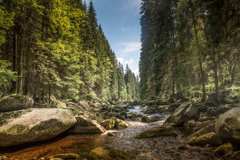 Řeka Vydra na Šumavě
