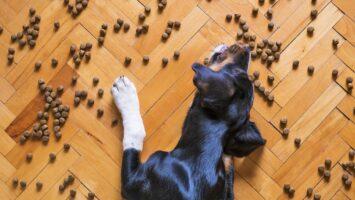 Granule a krmivo pro psa