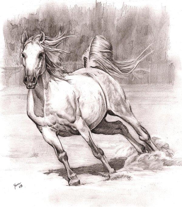 Jak Nakreslit Kone Poznejte Plemena Koni A Stavbu Jejich Tela
