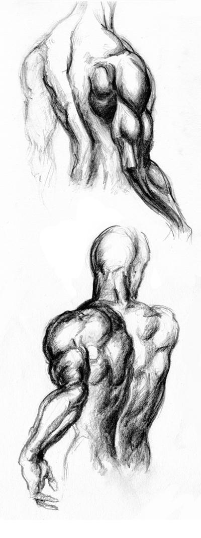 Jak Nakreslit Postavu Se Svalovou Soustavou K Dokonale Kresbe